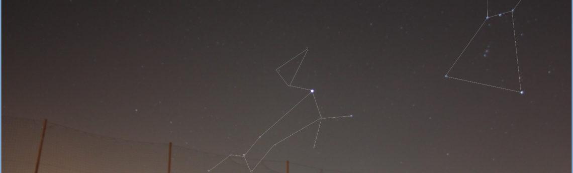 Cane Maggiore Orione